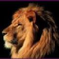 CaptureScreen(屏幕截图工具) v2.0.4396.15394绿色版