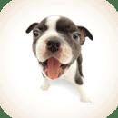 人狗语言翻译器免费版 v1.0.6安卓版